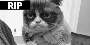 mladý blacl mačička