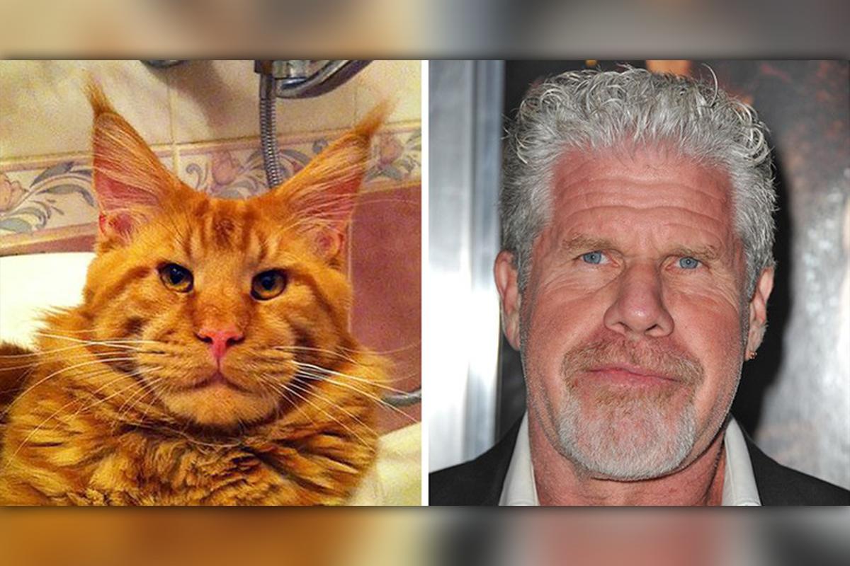 Vtipné fotografie zvierat, ktoré vyzerajú ako známe celebrity