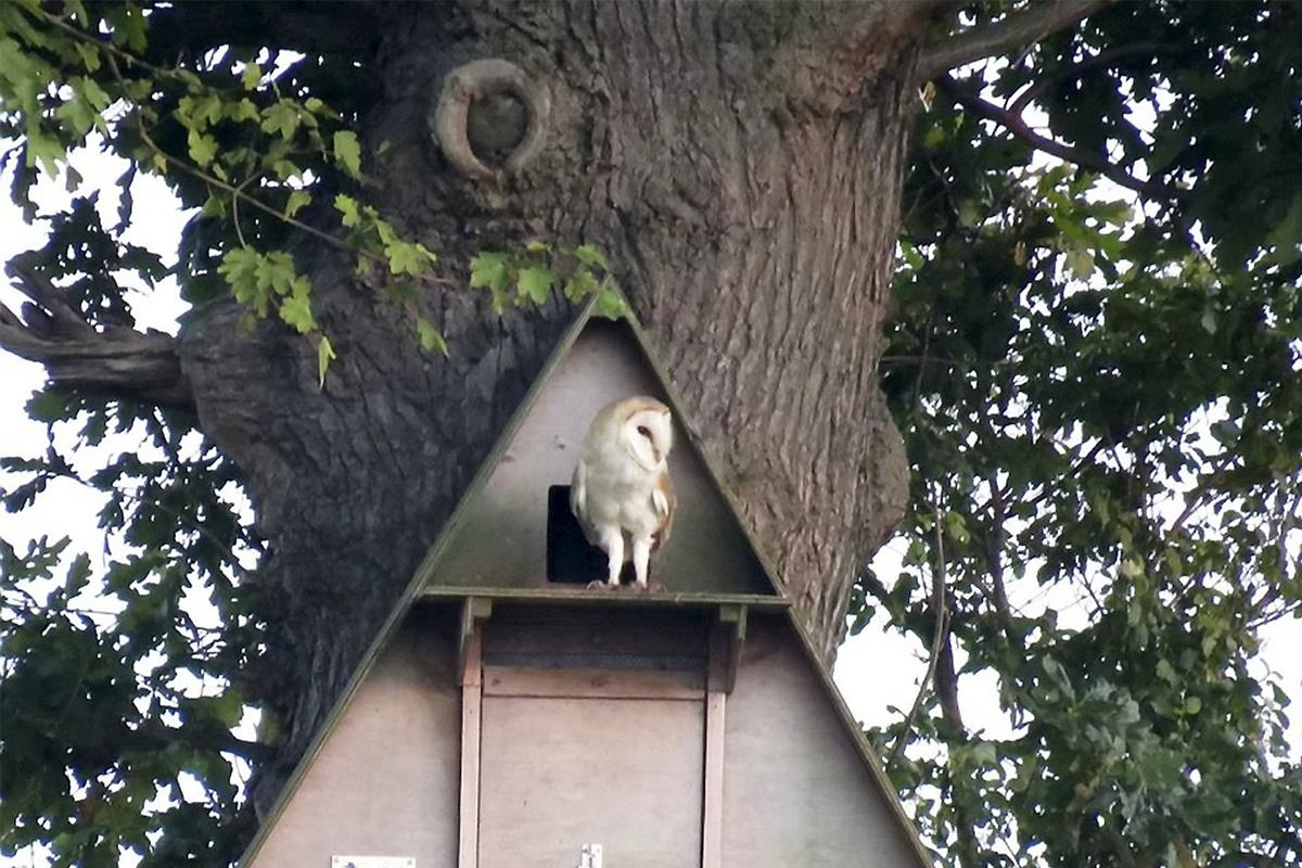 Facebook zakázal live stream hniezda so sovami pre porušenie pravidiel o nahote