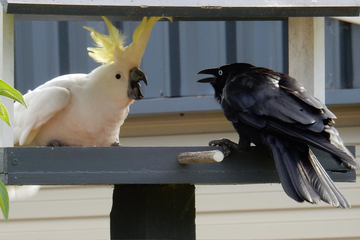 Účet na Twitteri zbiera fotky vtákov, s ktorými si naozaj neradno zahrávať