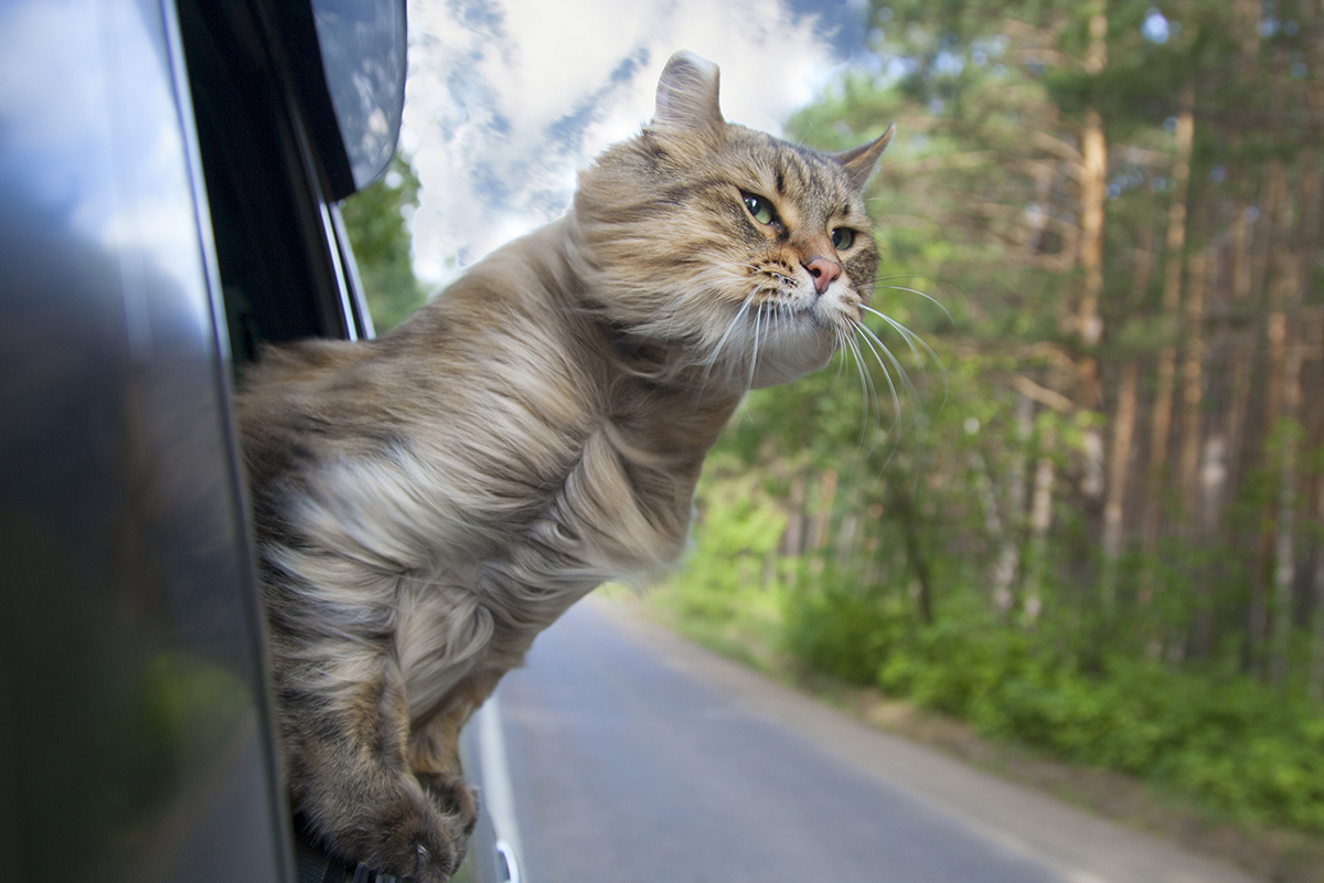 Adrenalínový život s chlpatým miláčikom. Muž a jeho mačka sa spoločne venujú extrémnym športom