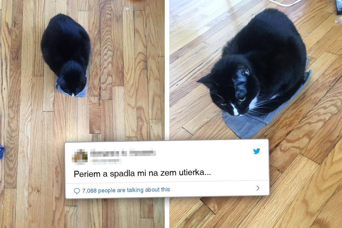 Život s mačkami je jedna veľká komédia. Presvedčia ťa o tom vtipné tweety ich majiteľov