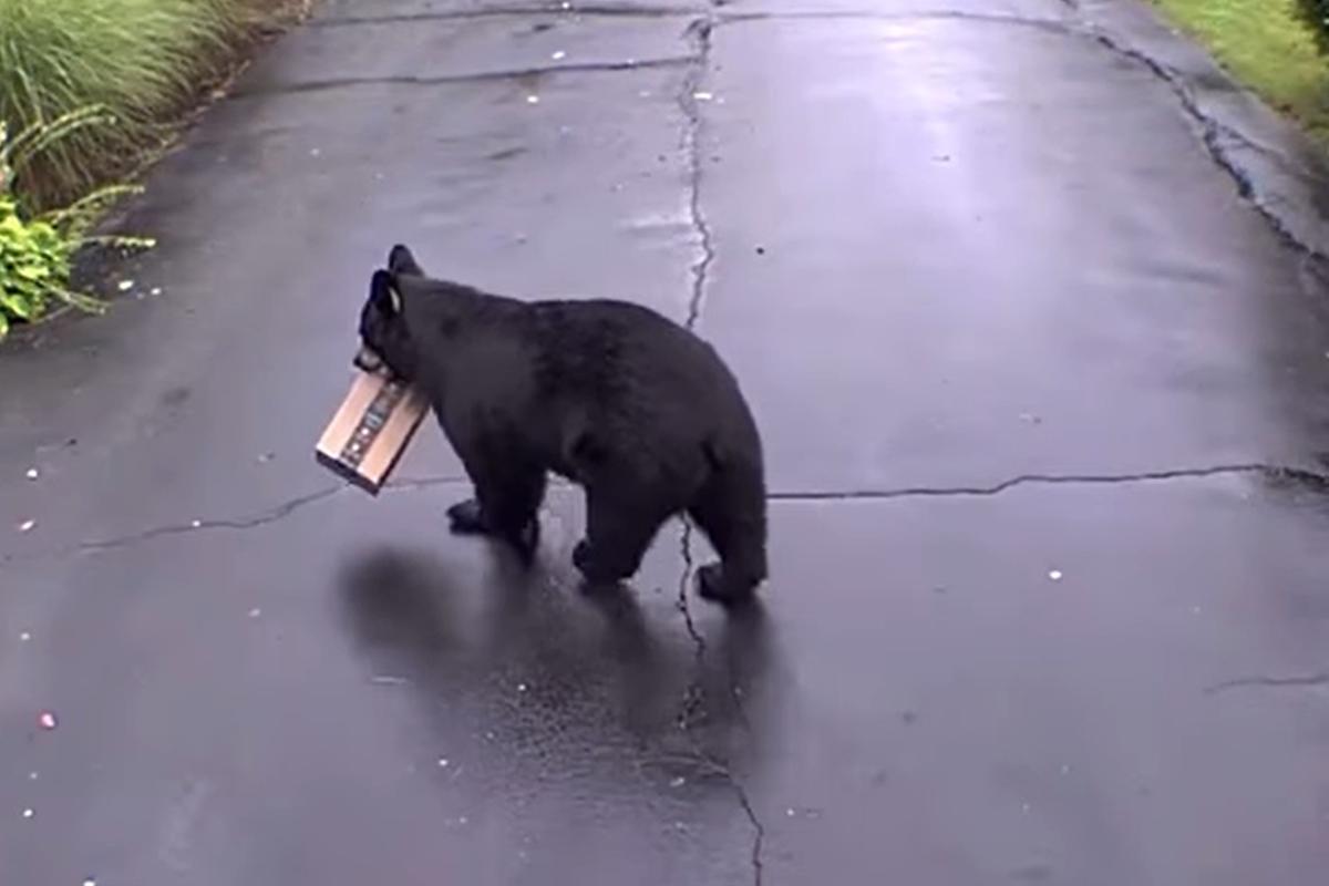 Medveď ukradol balík z Amazonu priamo spred domu