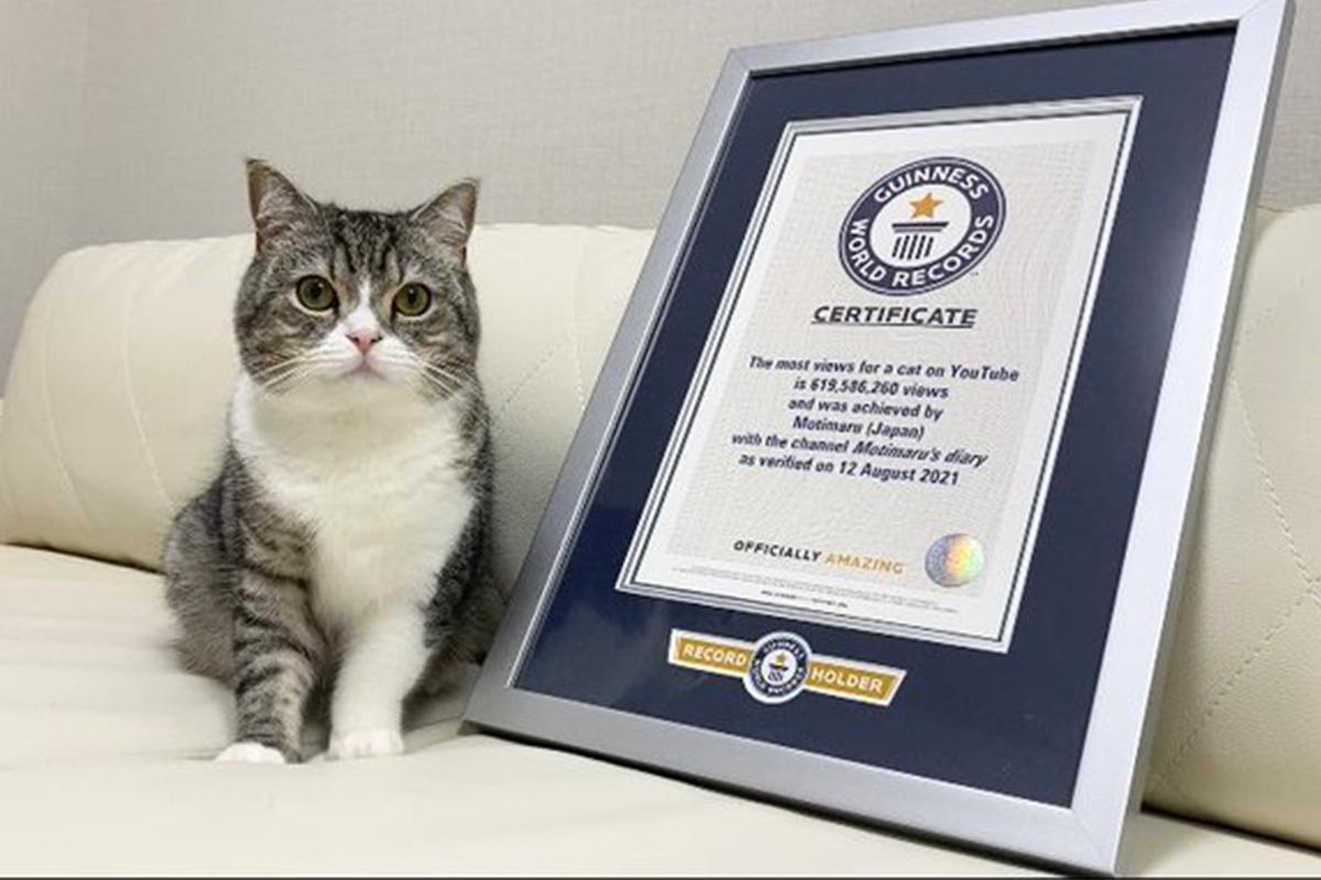 Kocúr Motimaru sa oficiálne stal najsledovanejšou mačkou na YouTube