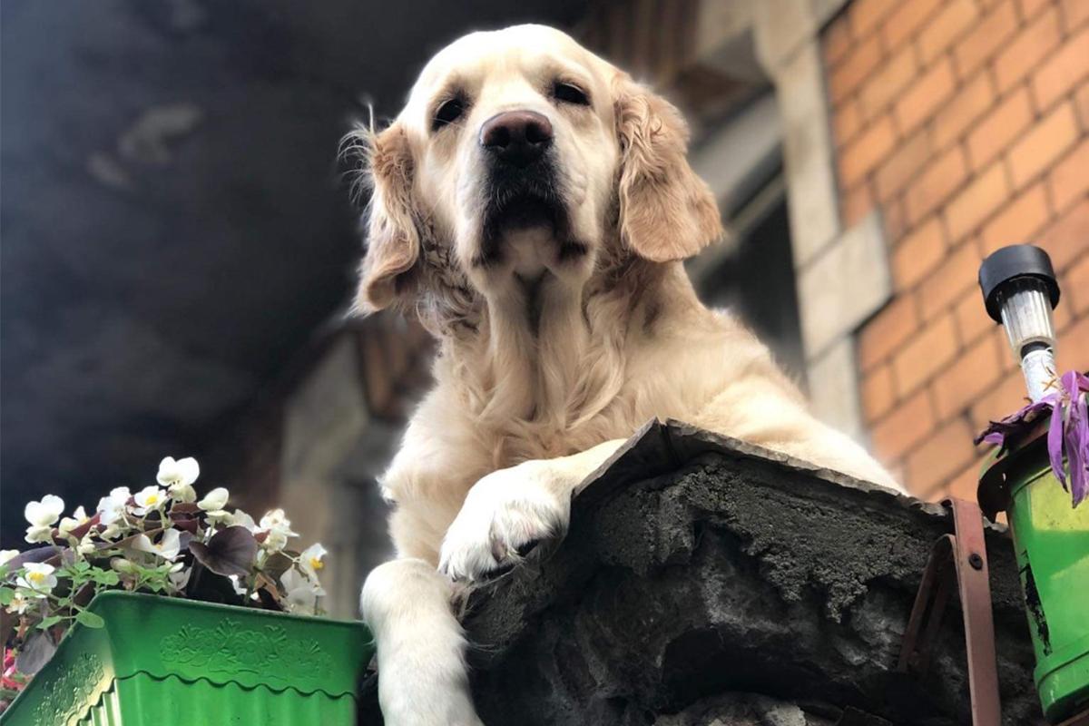 V poľskom meste majú netradičnú turistickú atrakciu. Ľudí tam z balkóna zdraví roztomilý psík