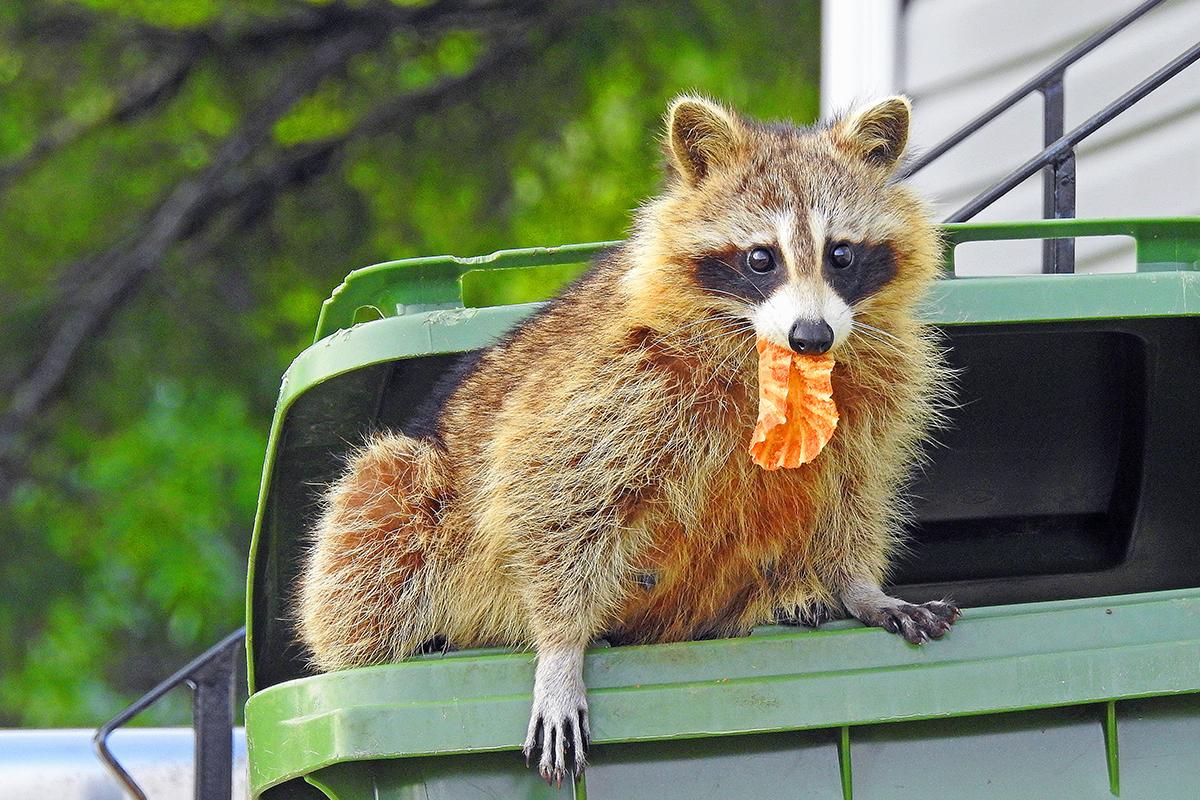 20 rozkošných a vtipných fotiek medvedíkov čistotných, ktoré ti zlepšia náladu